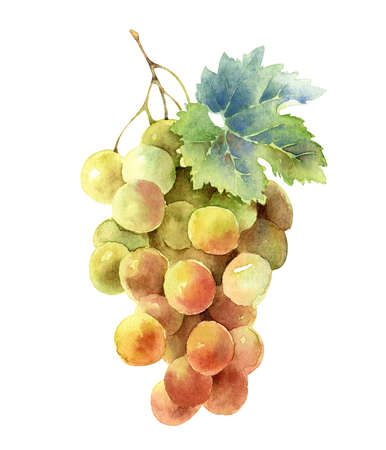 Bunch of grapes isolated on white background Banque d'images - 155161906