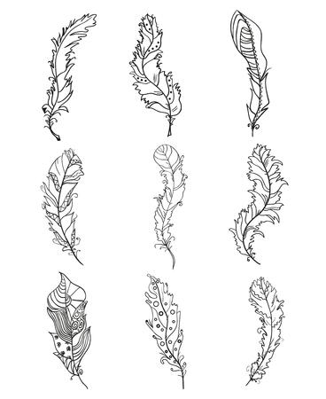 Plumas. Diseño. Plumas Dibujadas A Mano Con Patrones Abstractos ...
