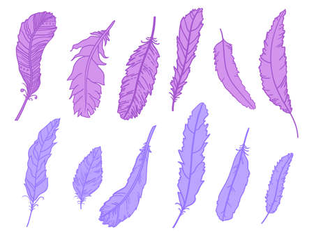 Feather. Hand drawn feathers on isolated white background. Print for design