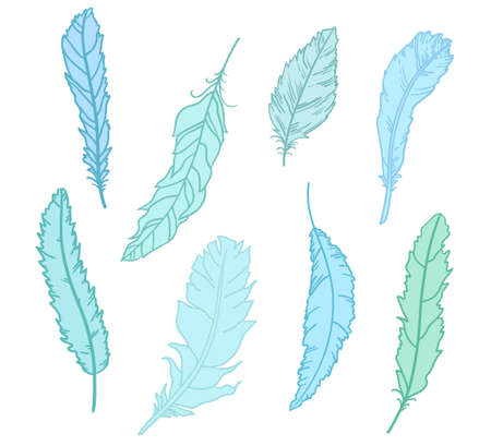 Feather. Design of colored feathers. Hand drawn elements on white background