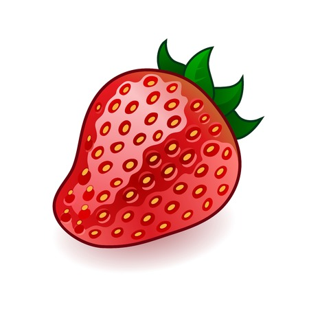 Isolated fresh shiny strawberry on white background. RGB EPS 10 vector illustration Vector