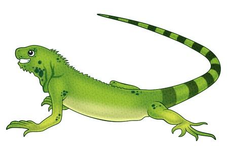 iguana Reklamní fotografie
