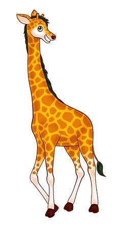 herbivores: giraffe