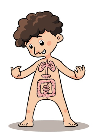 Child Body Organ  Body organ explaining of a child