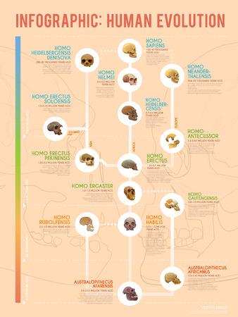 Echte menselijke evolutie vector web infographic. Menselijke voorouders. Stock Illustratie