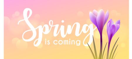 Hello spring. Crocuses