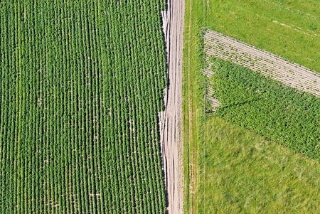 aerial: Immagine aerea del campo