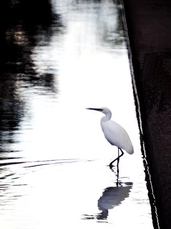 egrets: Egrets