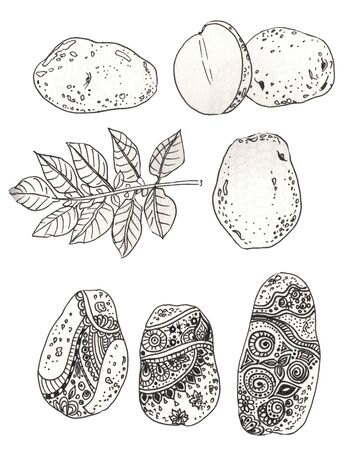 Potato drawing set. Isolated potatoes heap, sliced pieces and chips.