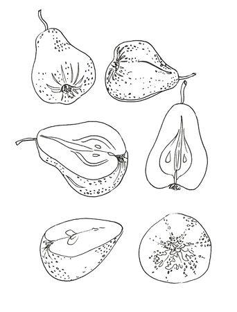 Pear fruit hand draw vintage clip art Zdjęcie Seryjne