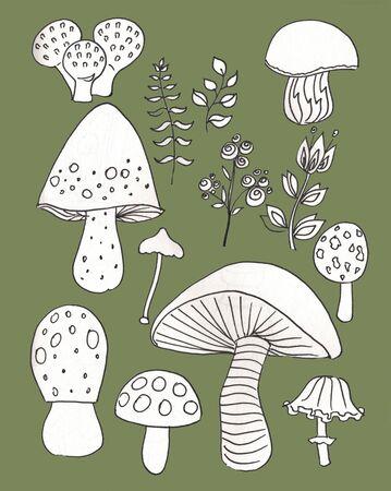 Mushroom hand drawn sketch illustration