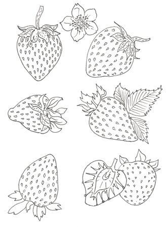 set of strawberries isolated on white Ilustracja
