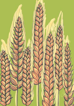 yellow brown ears of wheat on green background Zdjęcie Seryjne