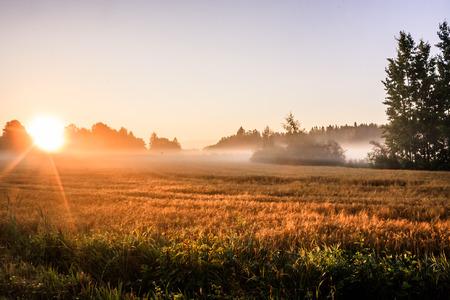 Summer Sunrise 3 photo