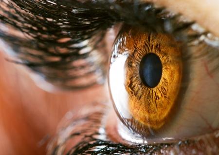 茶色の目のマクロ 写真素材