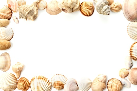 amazing big frame of conch sea shells on white background