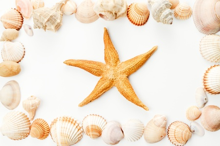 big frame of conch shells with starfish in cente photo