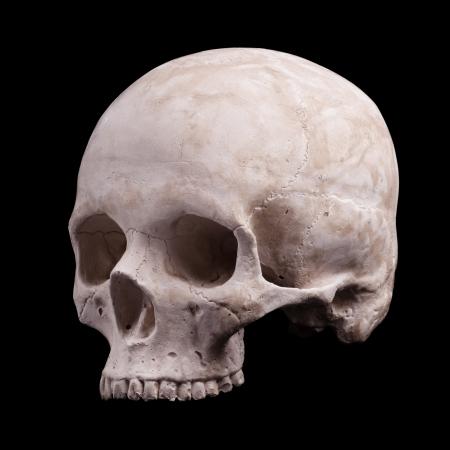 partes del cuerpo humano: modelo de cráneo humano aislado sobre fondo negro