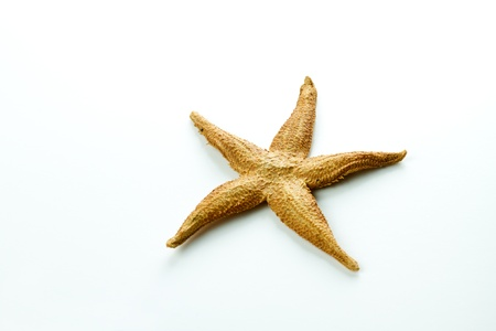 gold little starfish from the sea isolated on white background photo