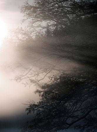 droop: Morning fog