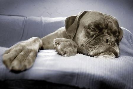 k9: Lazy dog