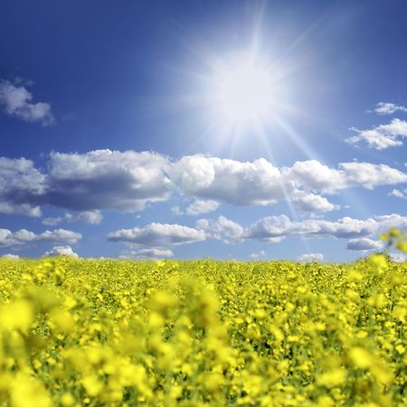 oilseed: Oilseed and clouds