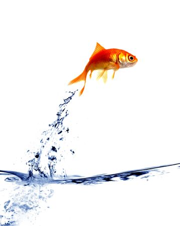 goldfish jumping out of the water Stock Photo - 2521326