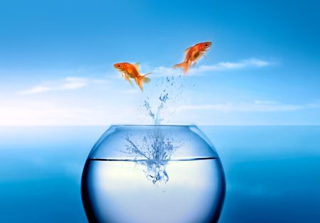 goldfish jumping out of the water Stock Photo - 2521322