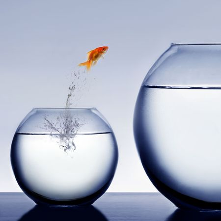 goldfish jumping out of the water Stock Photo - 2521318