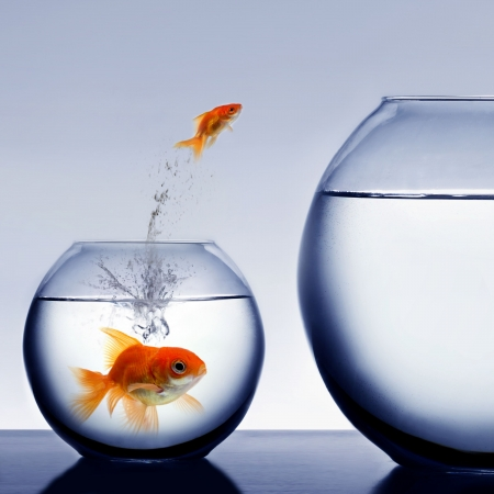 goldfish jumping out of the water Stock Photo - 2521325