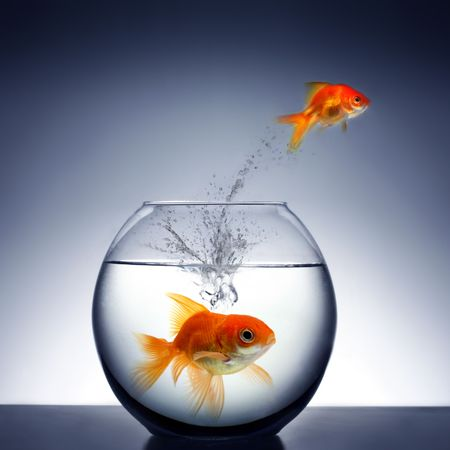 goldfish jumping out of the water Stock Photo - 2521330