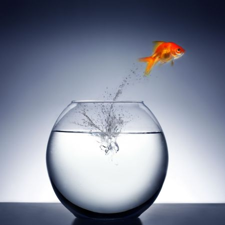 goldfish jumping out of the water Stock Photo - 2521327