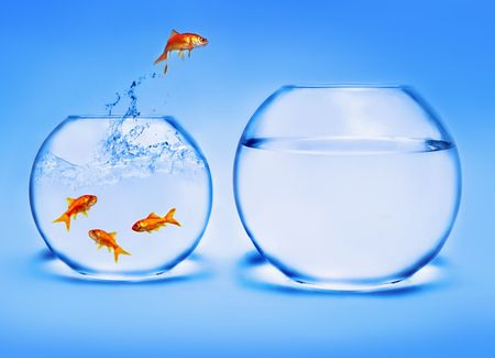goldfish jumping out of the water Stock Photo - 2521341