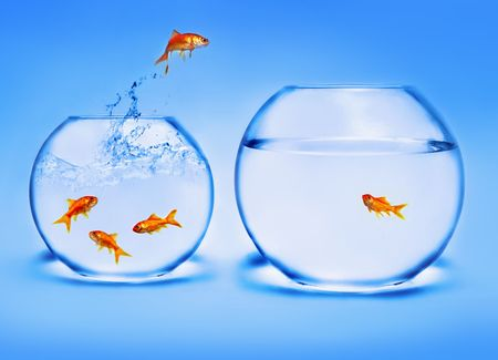 goldfish jumping out of the water Stock Photo - 2521361