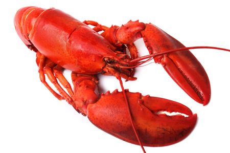whole red lobster isolated on white background Standard-Bild