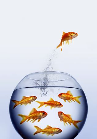 goldfish jumping out of the water from a  crowded bowl Stock Photo - 3764087