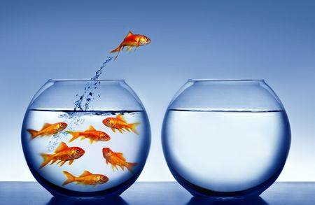 escape: goldfish jumping out of the water