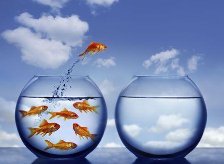 złota rybka: goldfish skoków z wody z zatłoczonych miska Zdjęcie Seryjne