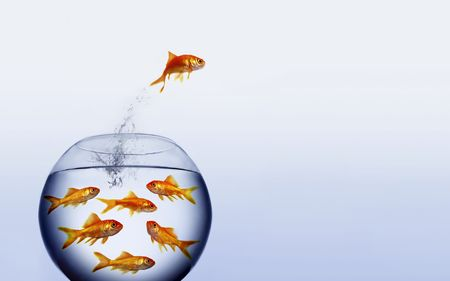 claustrophobia: goldfish jumping out of the water from a  crowded bowl