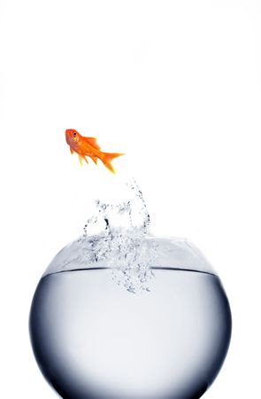 goldfish jumping out of the water Stock Photo - 3776754