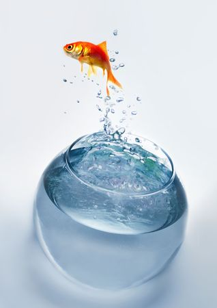 goldfish jumping out of the water Stock Photo - 3808585