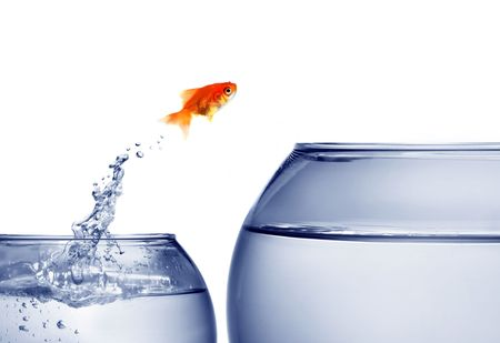 goldfish jumping out of the water Stock Photo - 3814422