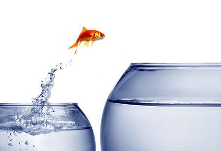 fish tank:  goldfish jumping out of the water