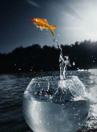 goldfish jumping out of the water Stock Photo - 5095878