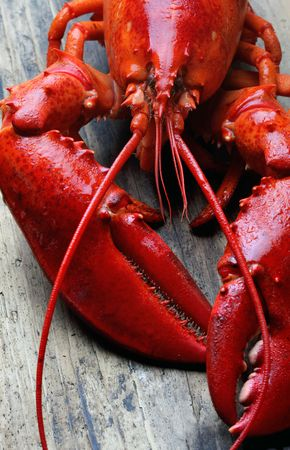 lobster: whole red lobster on wood Stock Photo