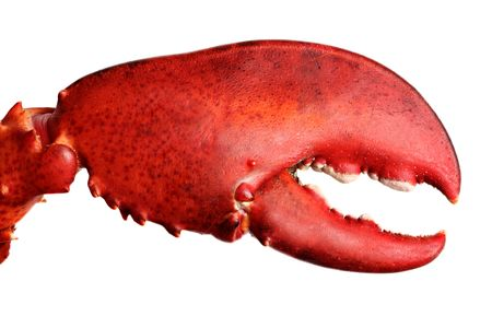 lobster: Crusher Claw