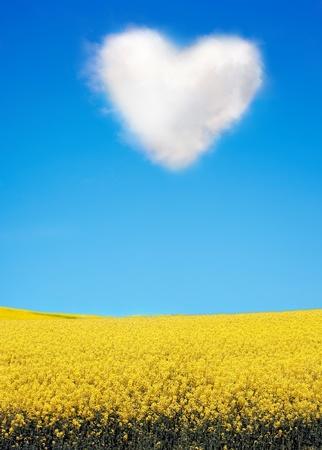oilseed rape:  Oilseed and a heart shaped cloud