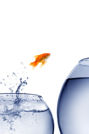goldfish jumping out of the water  photo