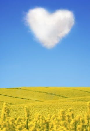 oilseed:  Oilseed and a heart shaped cloud
