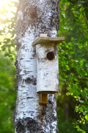 Birdhouse in tree  photo